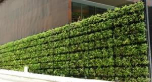 Tournesol-VGM-modulos-muro-vegetal-5